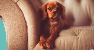 5 geniales ideas de mobiliario para tu mascota