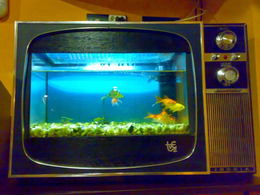 cientos de especies para elegir entre peces de agua dulce y los de agua salada seguro que entre unos y otros hallamos el ideal para nuestra casa